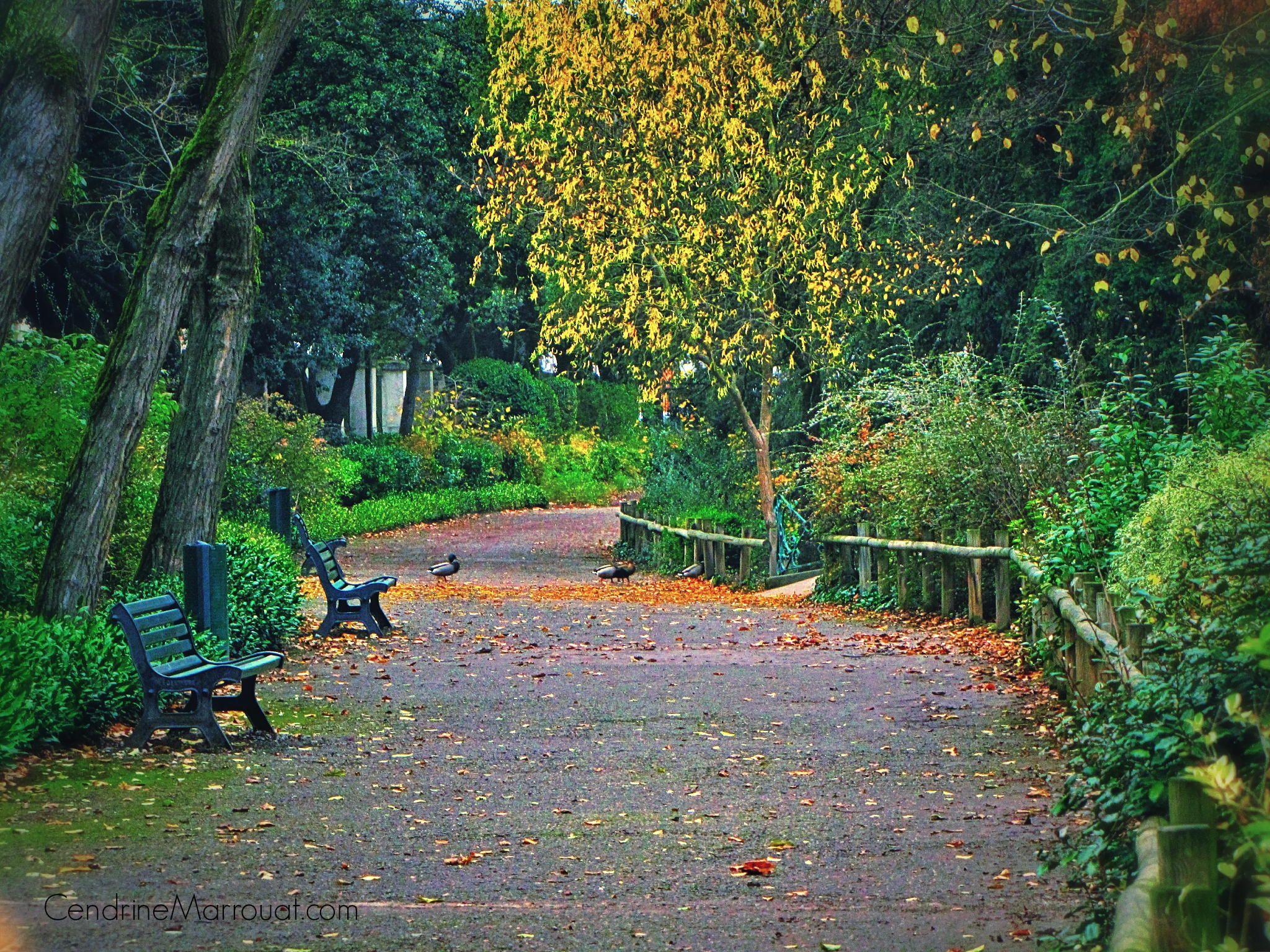 Jardin des plantes Toulouse France by Cendrine Marrouat on 500px