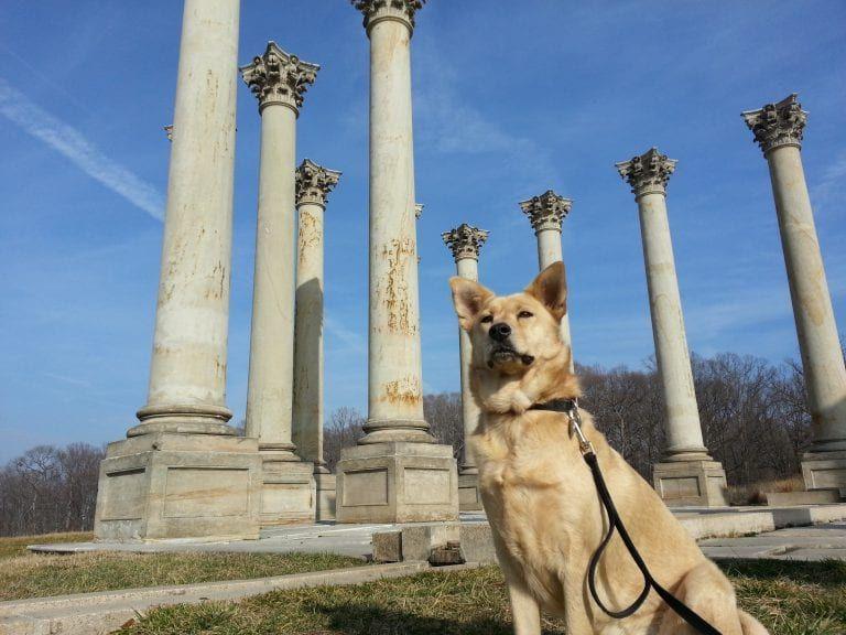 Washington Dc Dog Friendly Day Trip Reverberations In 2020 Dog Friends Washington Dc Travel Day Trip
