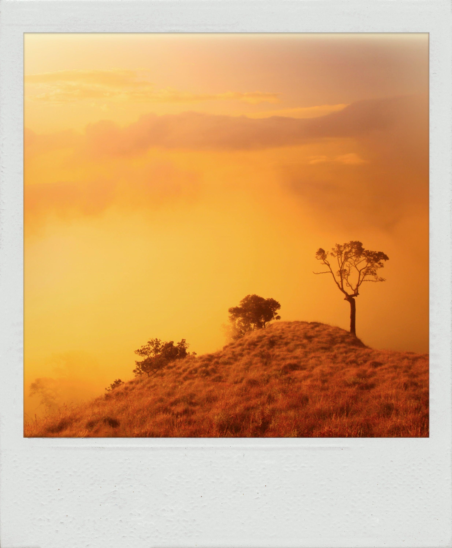 Majestic Mist Landscape Polaroid Instant Nature Sky Country Countryside Landscapes Fog Foggy Tree Mountain Beautiful Beauty Horizon Colors E
