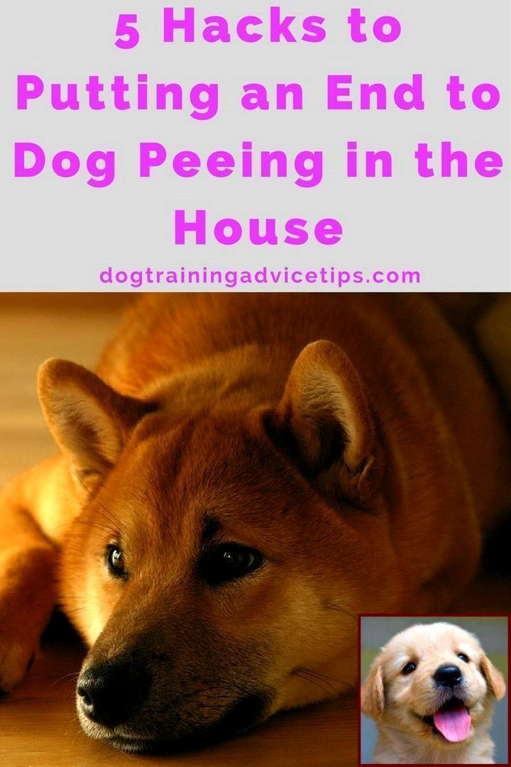 House Training A Puppy Schedule And Clicker Training Dogs Not To