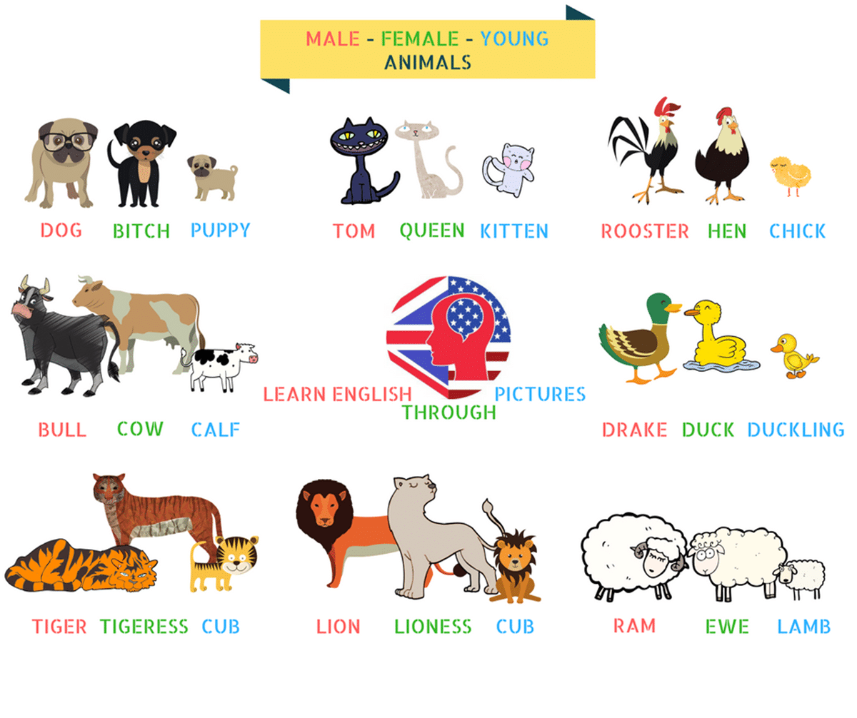 Adult English Vocabulary Pets