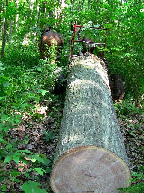 Red Oak Log Oak Logs Forest Pictures Old Trees