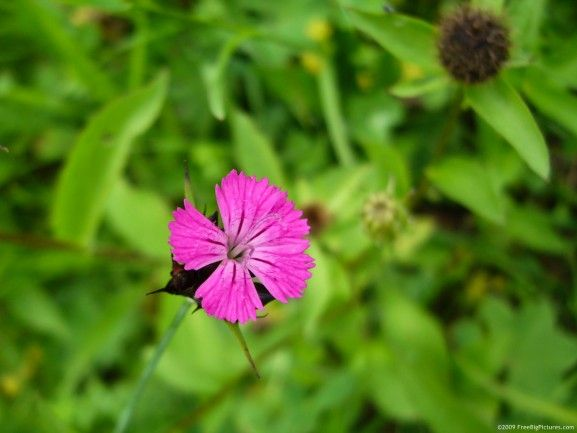 Photo of pink wild flower is a lovely picture to free download