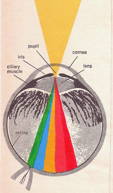 Eye / Eyeball / Spectrum / Vision / Retro Anatomy illustration ...