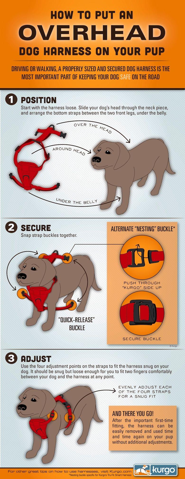 How To Put On An Overhead Dog Harness Dog Infographic Dog