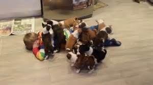 When puppies attack!