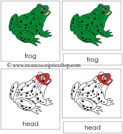Frog Nomenclature - Cards (red) | Zoology Nomenclature (in Red ...
