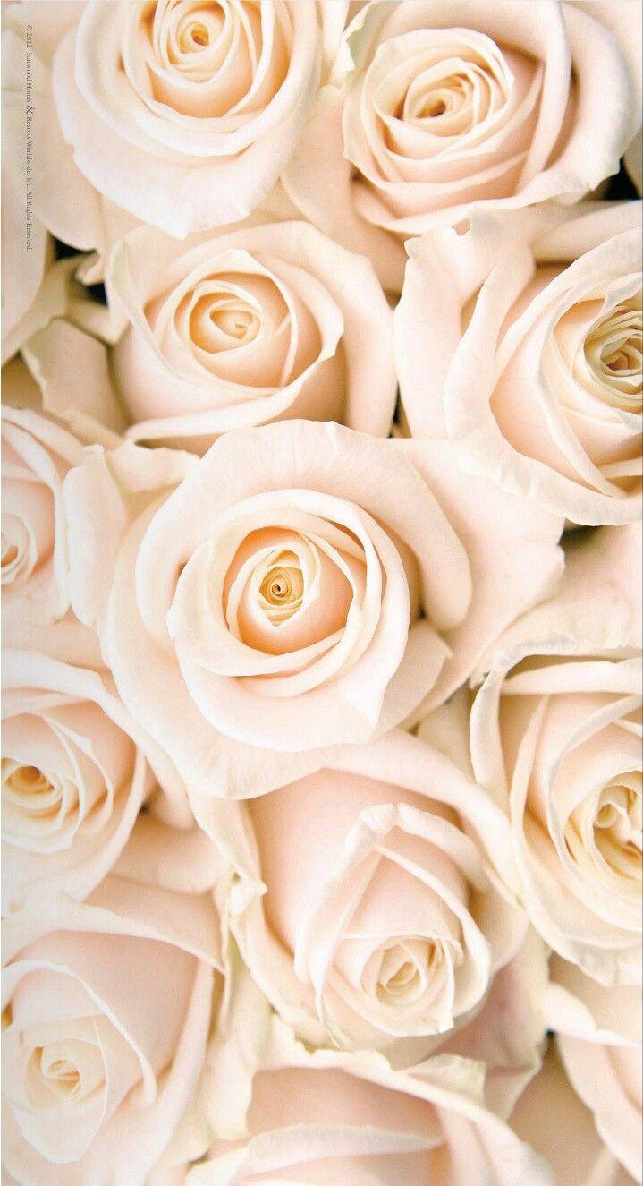 Wedding Blush White Roses Wallpaper Rose Gold Wallpaper Rose Wallpaper