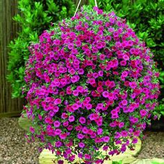 Best Flowers For Hanging Baskets Hanging Basket Flowers Hanging