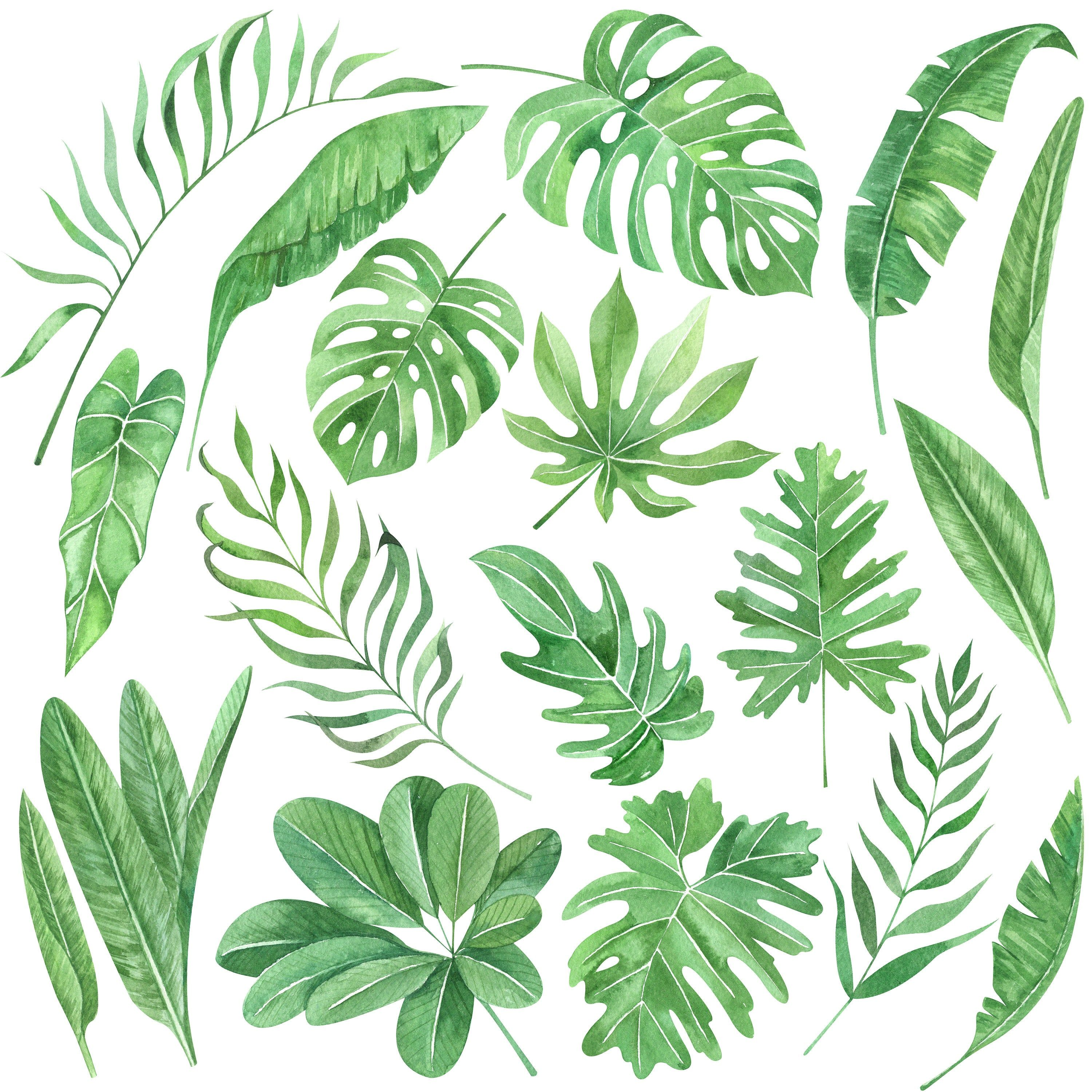 Watercolor Green Tropical Leaves Clip Art Tropical Leaves Etsy Tropical Flowers Illustration Plant Illustration Flower Clipart Edit and share any of these stunning tropical flower clipart pics. watercolor green tropical leaves clip