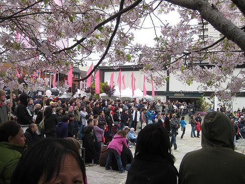 Northern California Cherry Blossom Festival Cherry Blossom Festival Cherry Blossom Festival