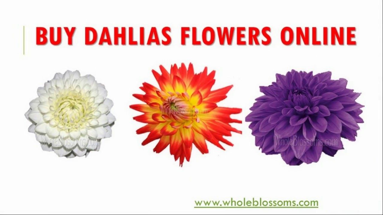 Pin By Wholeblossoms On Buy Dahlias Flowers Online Www