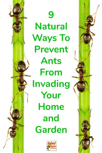 8ee10da5893ffe0d45c91cf422e547f0 - How To Get Rid Of Ants In Vegetable Garden Naturally