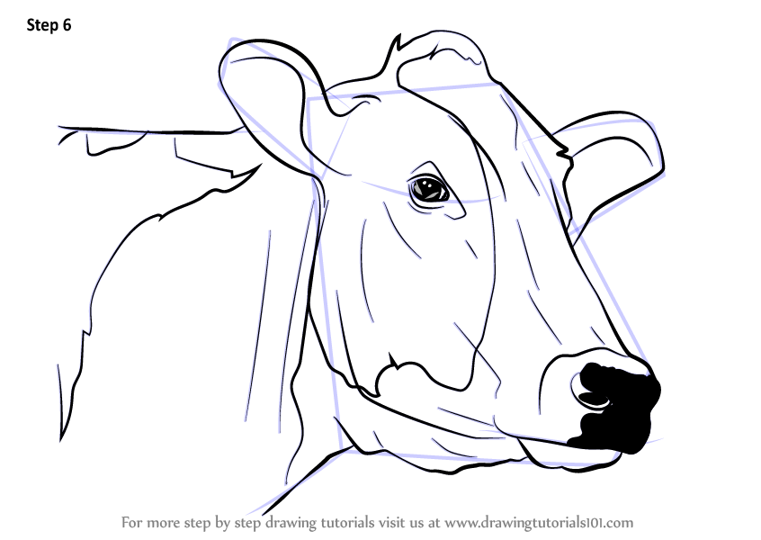 Learn How To Draw A Cow Face Animal Faces Step By Step Drawing
