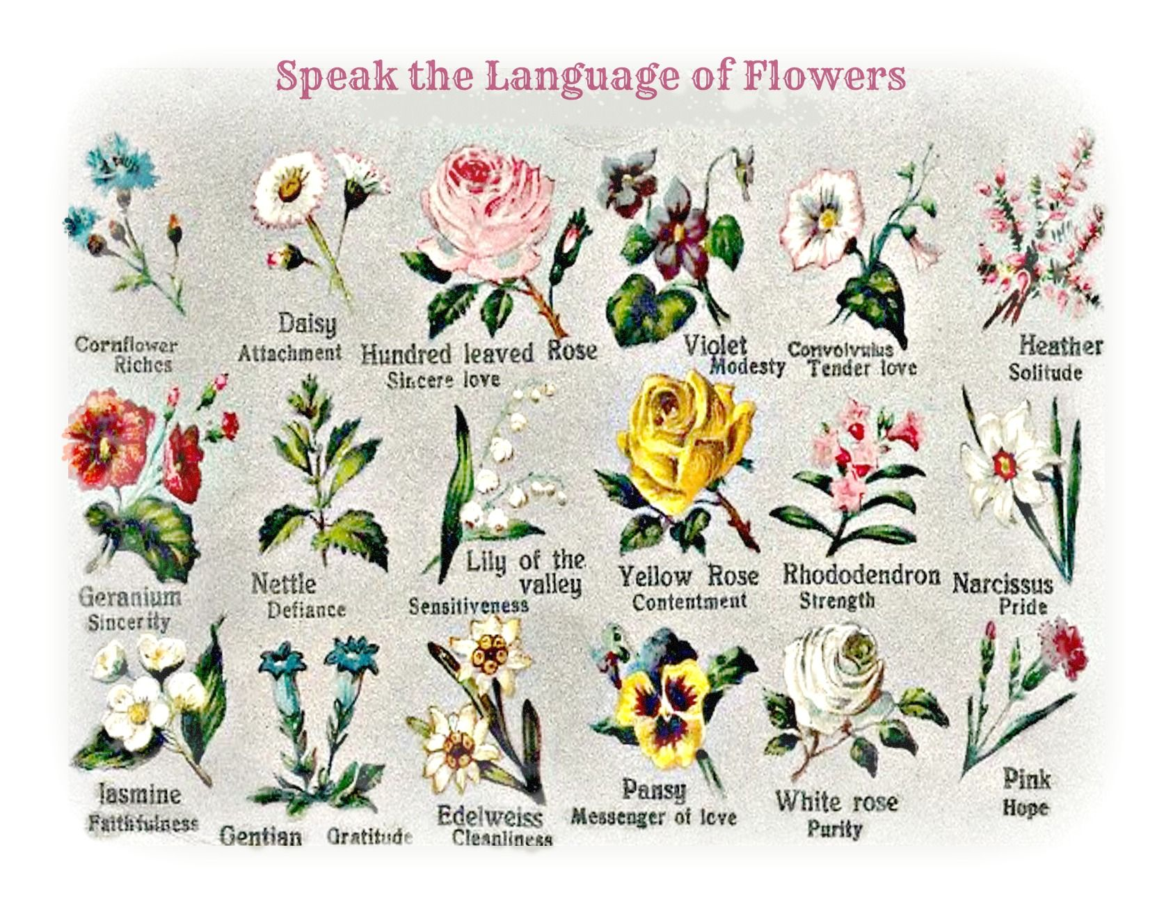 Speak The Language Of Flowers From An Early 1900 S Postcard Language Of Flowers Flower Meanings Spring Wedding Flowers