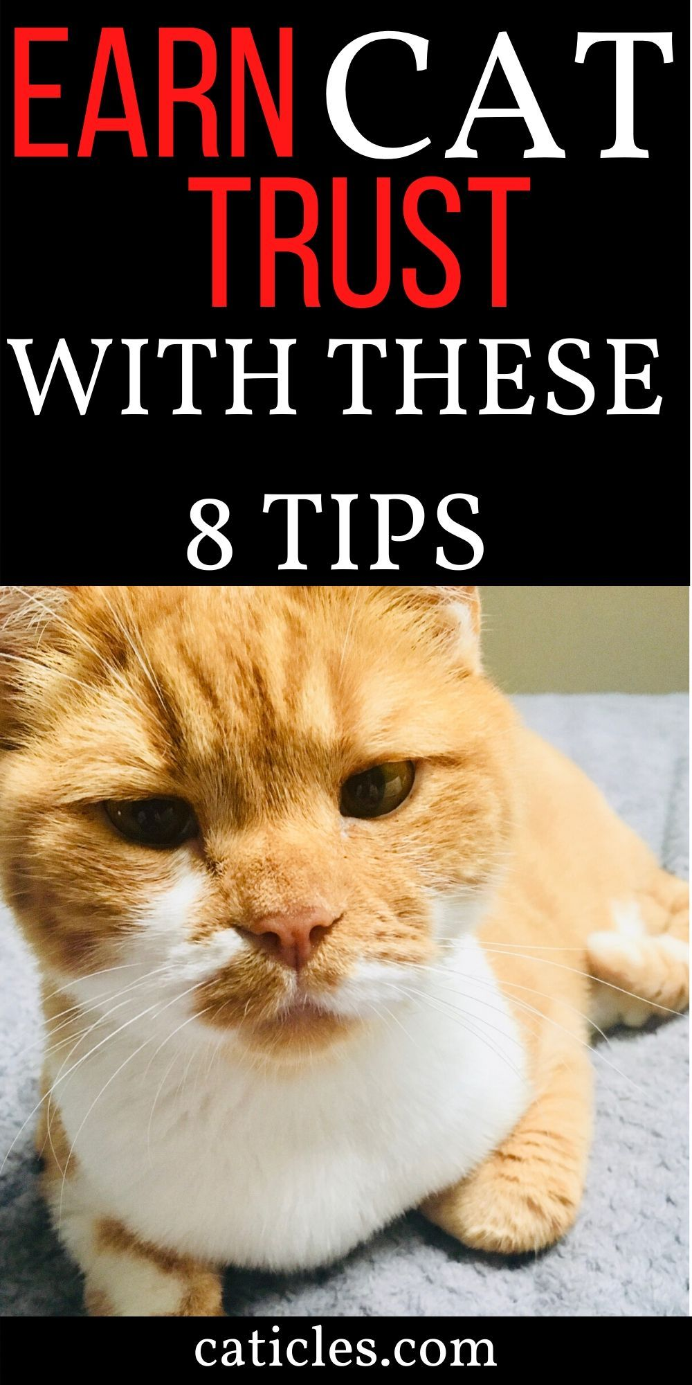 Cat Rituals That Stop Your Cat From Waking You At 3 Am Caticles In 2020 Cats Cat Language Cat Problems