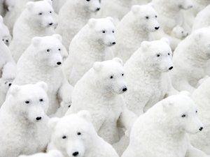 Muista! Ensi talvena sitten jääkarhulumiukkoja.