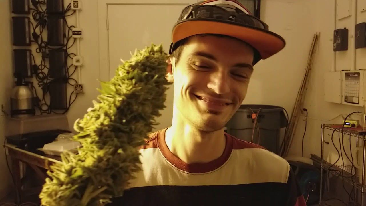 Kid gets slapped in the face with weed in slow motion trees