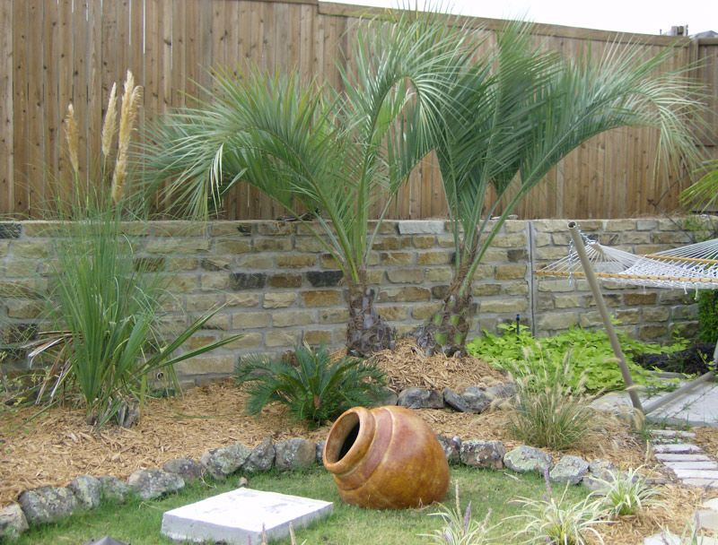North Texas Palms And Pottery