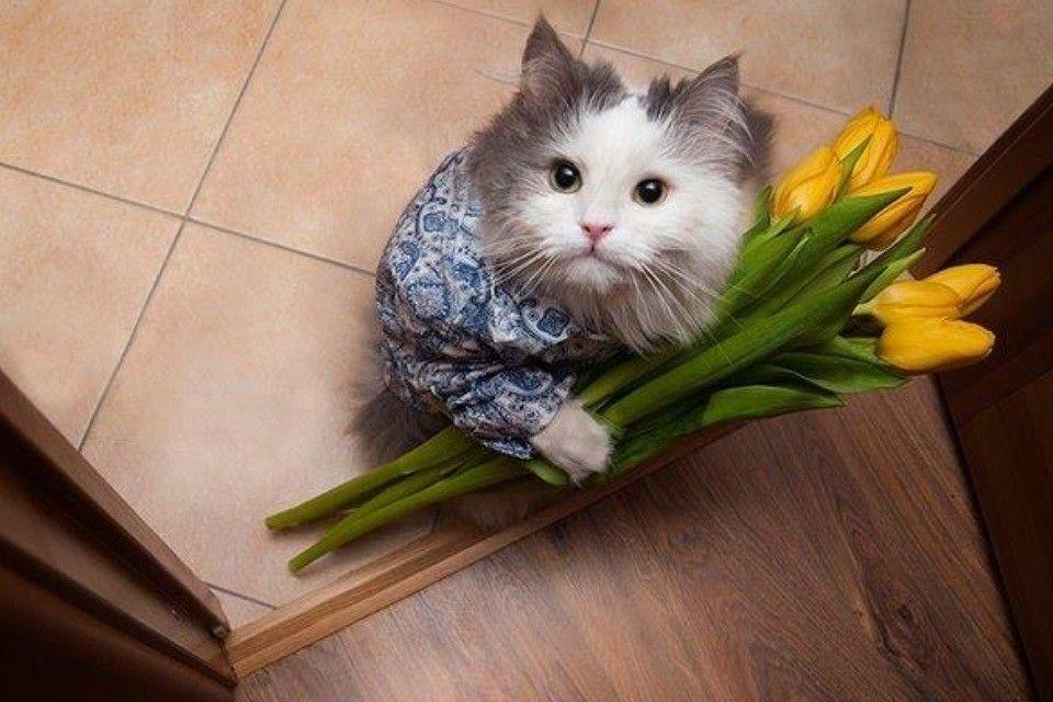 Одноклассники | Смешные фото кошек, Смешные фотографии ...
