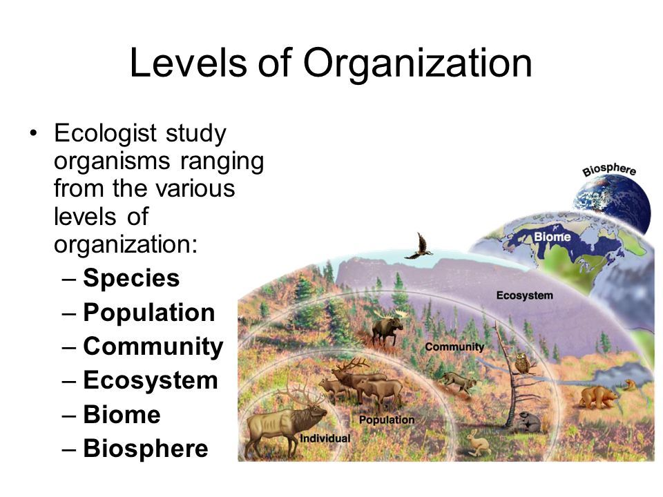 Levels Of Organization Ecologist Study Organisms Ranging From The Various Levels Of Organization Species Biomes Abiotic Interactive Science