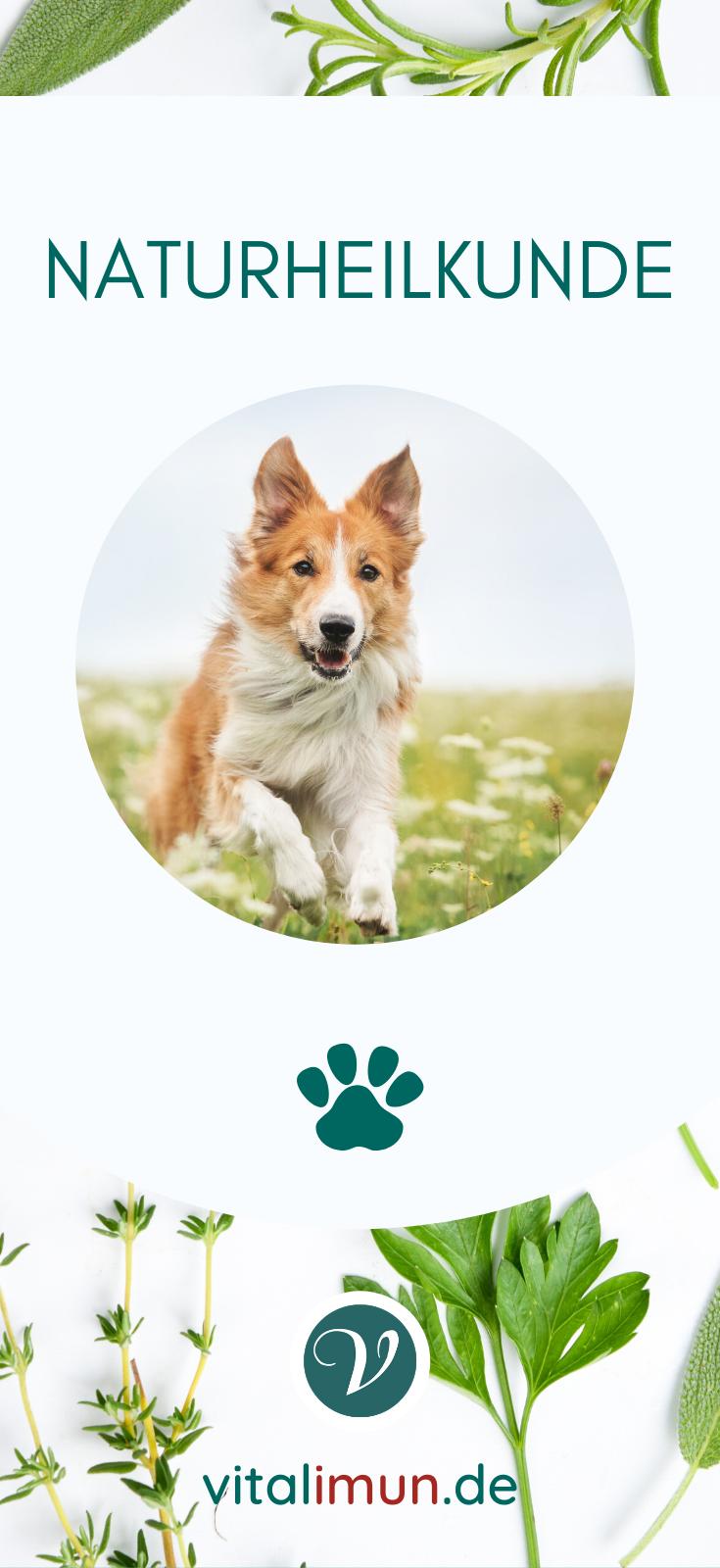 Vita Hound Intensiv Naturliches Erganzungsfuttermittel Fur Hunde In 2020 Naturheilkunde Hunde Hund Naturlich