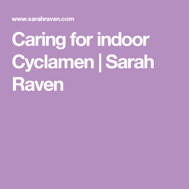 Caring for indoor Cyclamen | Sarah Raven