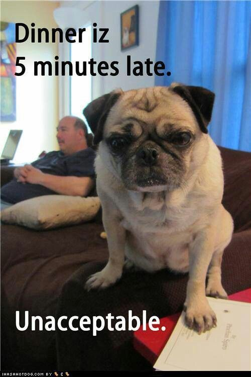 So All My Dogs Cute Pugs Funny Dog Memes Cute Funny Animals