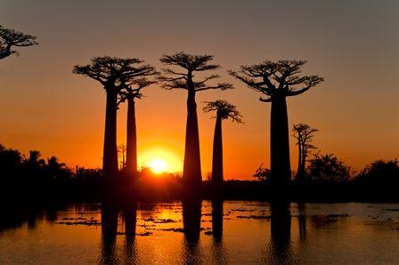 coucher de soleil avenue de baobab coucher de soleil. Black Bedroom Furniture Sets. Home Design Ideas