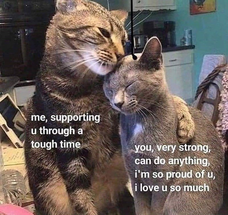 Twenty Two Inspirational Cat Memes My Landlady Emailed Me Cute Memes Wholesome Memes Cute Love Memes