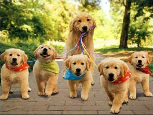 Who wants this FurBuddies family to stay with them??  https://t.co/02DnEtYFGa #Furbuddies #DogLover #DogLover #Dogs #Dog