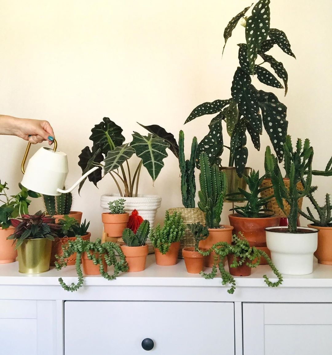House Plants For Shady Rooms: 2020 的 40+ Beautiful Plants Ideas For Home Decor 主题