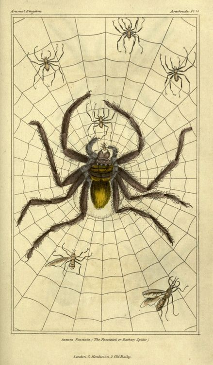 Spooky Spiders and Spider Web Halloween Decor Vintage Halloween Poster Print