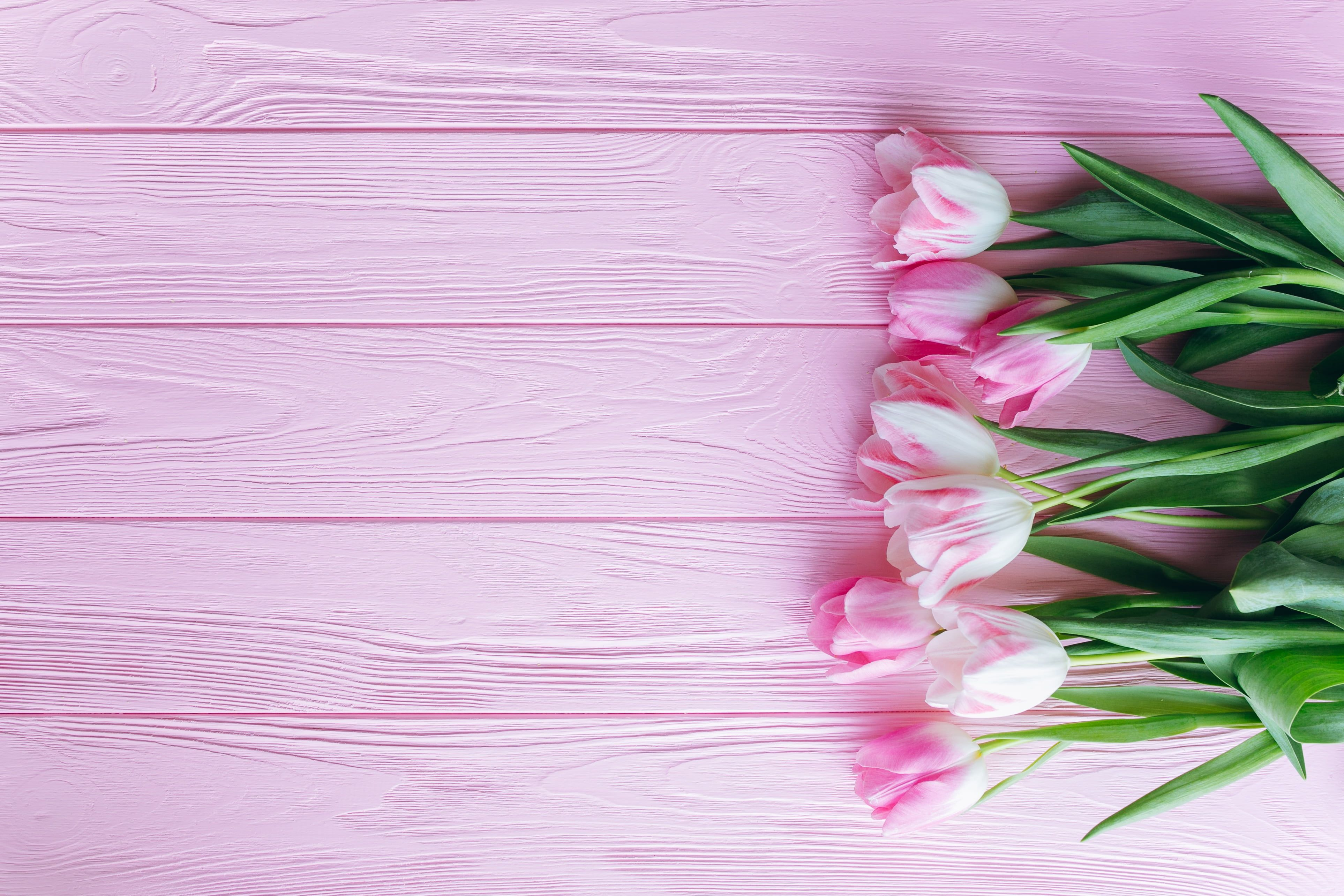 Pink Tulips Flowers Tulips Pink Wooden Background 4k