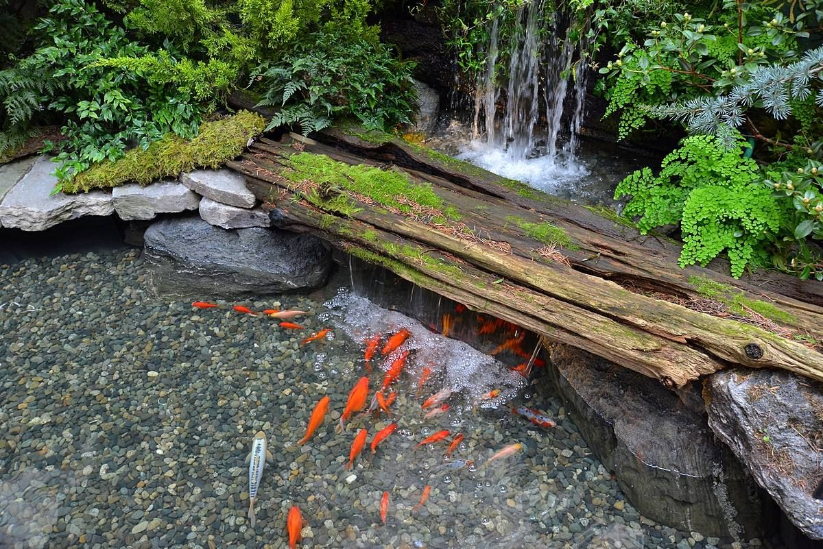 Koi pond in the spring prelude indoor garden yard for Fish pond landscaping