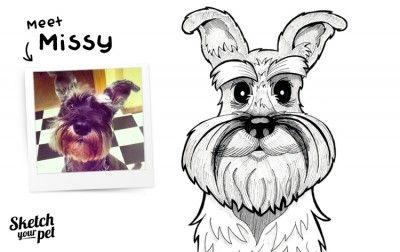 Meet Missy the miniature schnauzer #petportrait #art #illustration #petsketch #dogsketch #dogs #pencilsketch