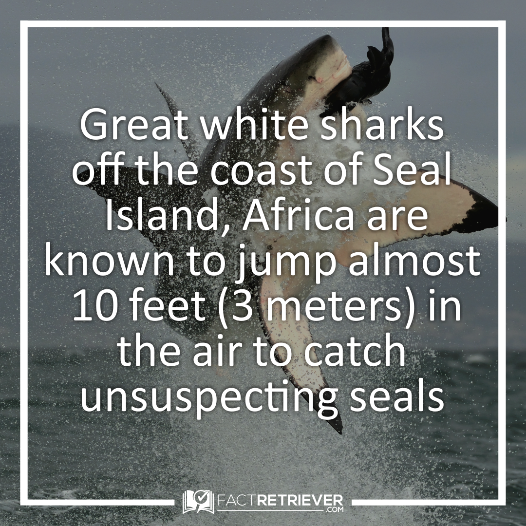 82 Interesting Facts About Sharks