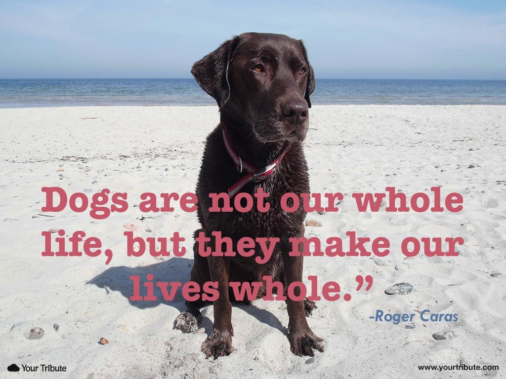 Whole Life Quote Quote  Roger Caras Dogs Are Not Our Whole Life But They Make