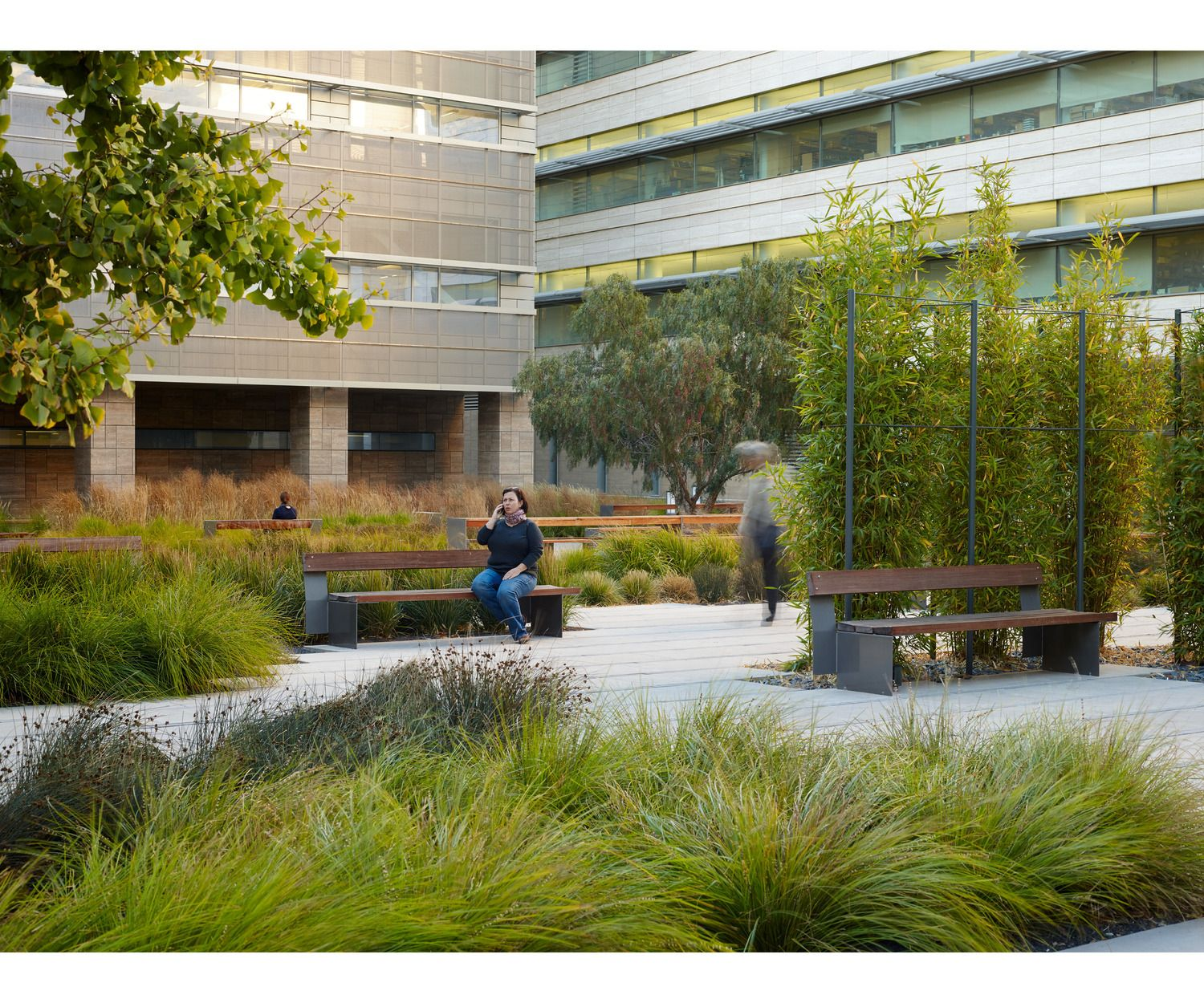 Modern Landscape Architecture Design: Use Grasses And Sedges With A Variety Of Colour, Texture