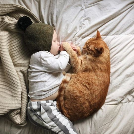 cat snuggles with baby boy
