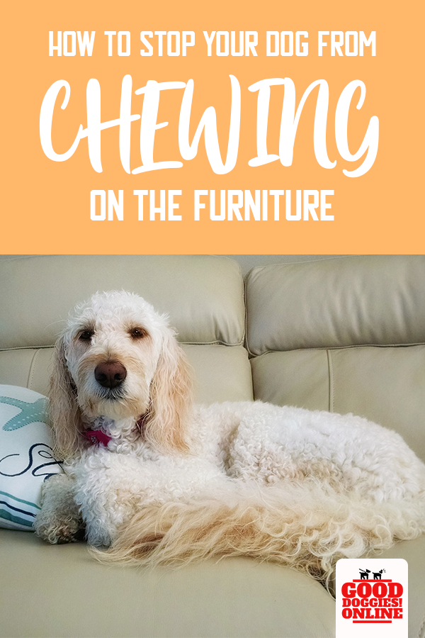 Easy Ways On How To Stop A Dog From Chewing On Furniture Dog Training Obedience Dog Training Dog Behavior Problems