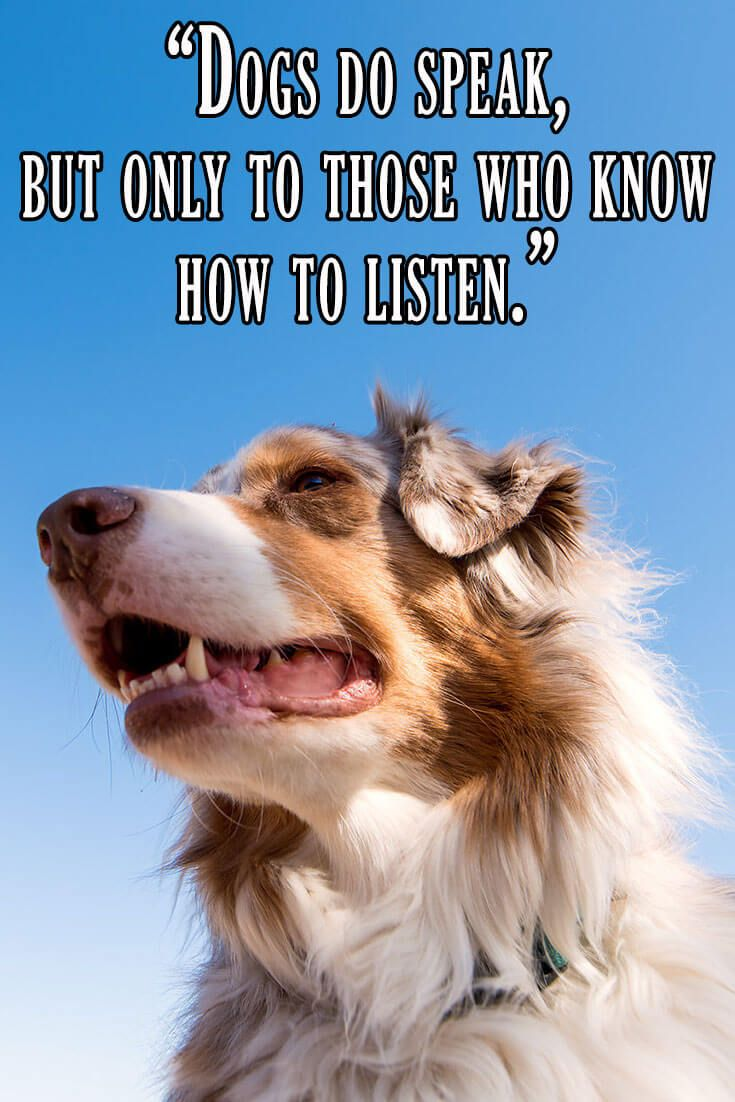 Quotes About Dogs And Friendship 30 Quotesfamous People That All Dog Lovers Can Relate To Part