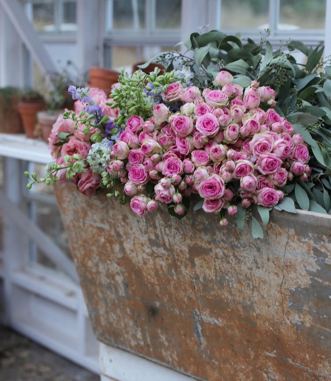 Image du tableau Jardins Anglais de ANNA VICTORIA | Decoration florale, Fleurs, Jardin anglais