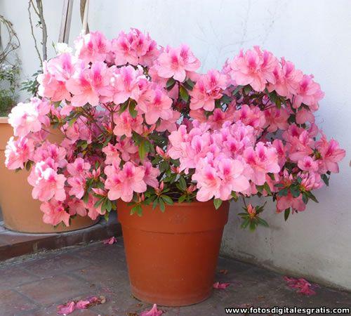 flores plantas arboles fotos digitales gratis banco de imágenes