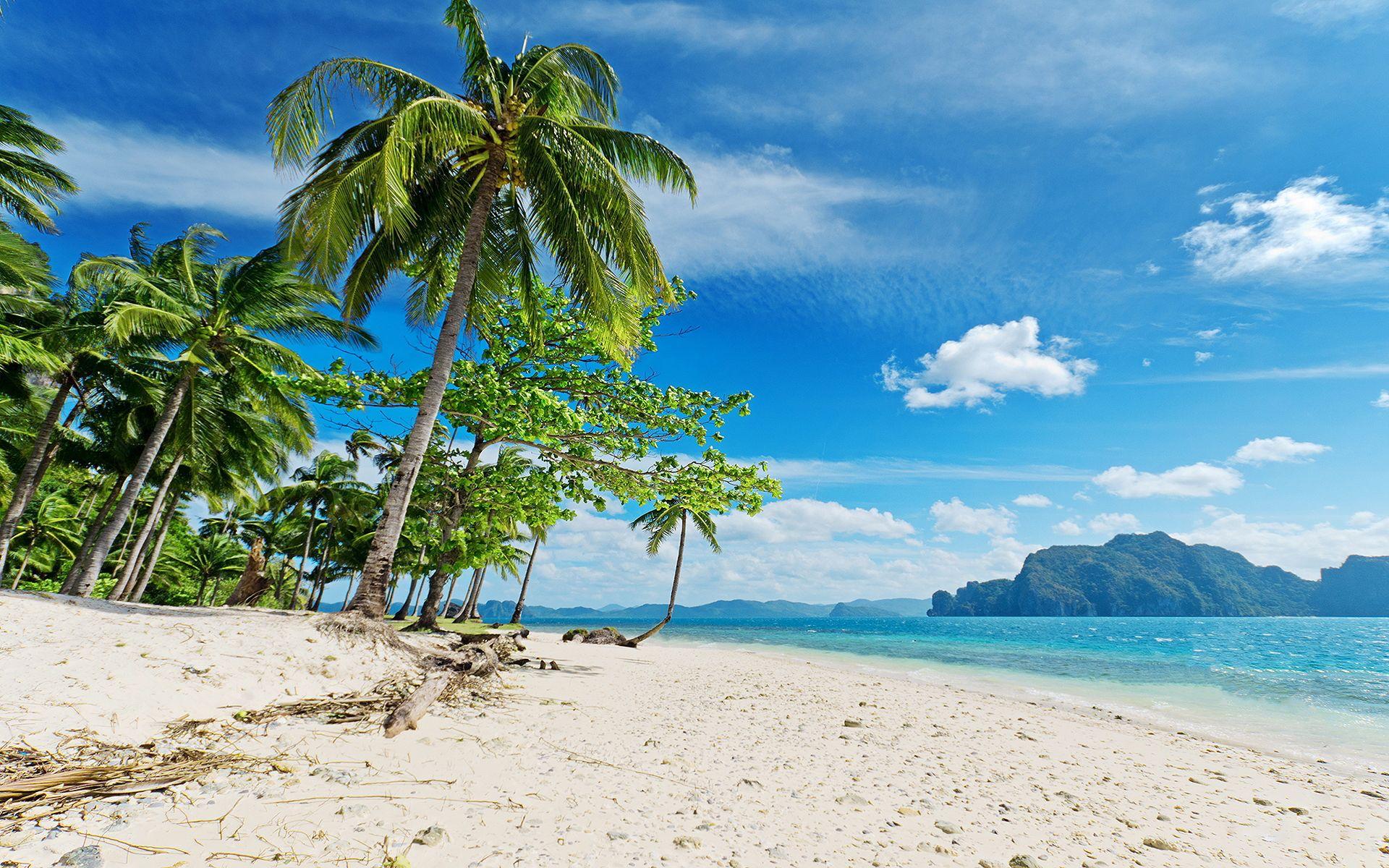 Sunny Tropical Beach Palms Hd Wallpaper Beach Wallpaper Summer Beach Pictures Beach Photos