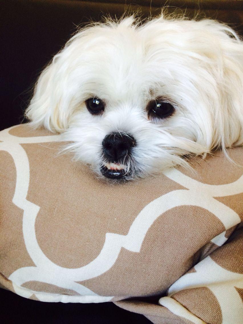 Baxter!   Dogs, Baxter