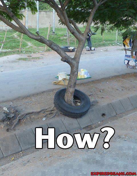 Thanks tree you broke reality?!