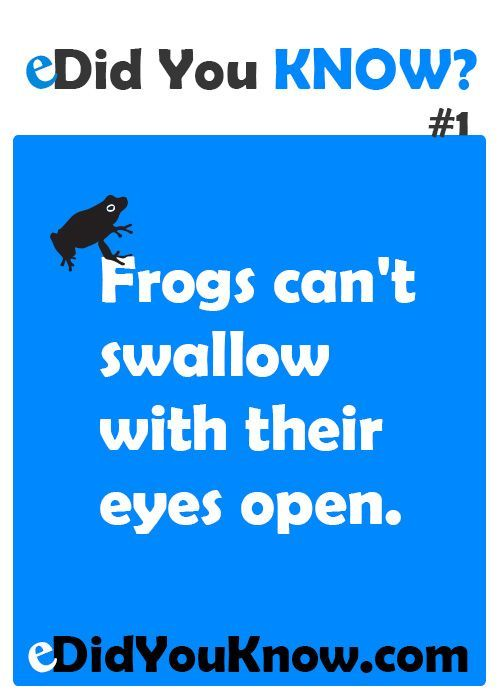 Can frogs sneeze with their eyes open? #interestingfacts