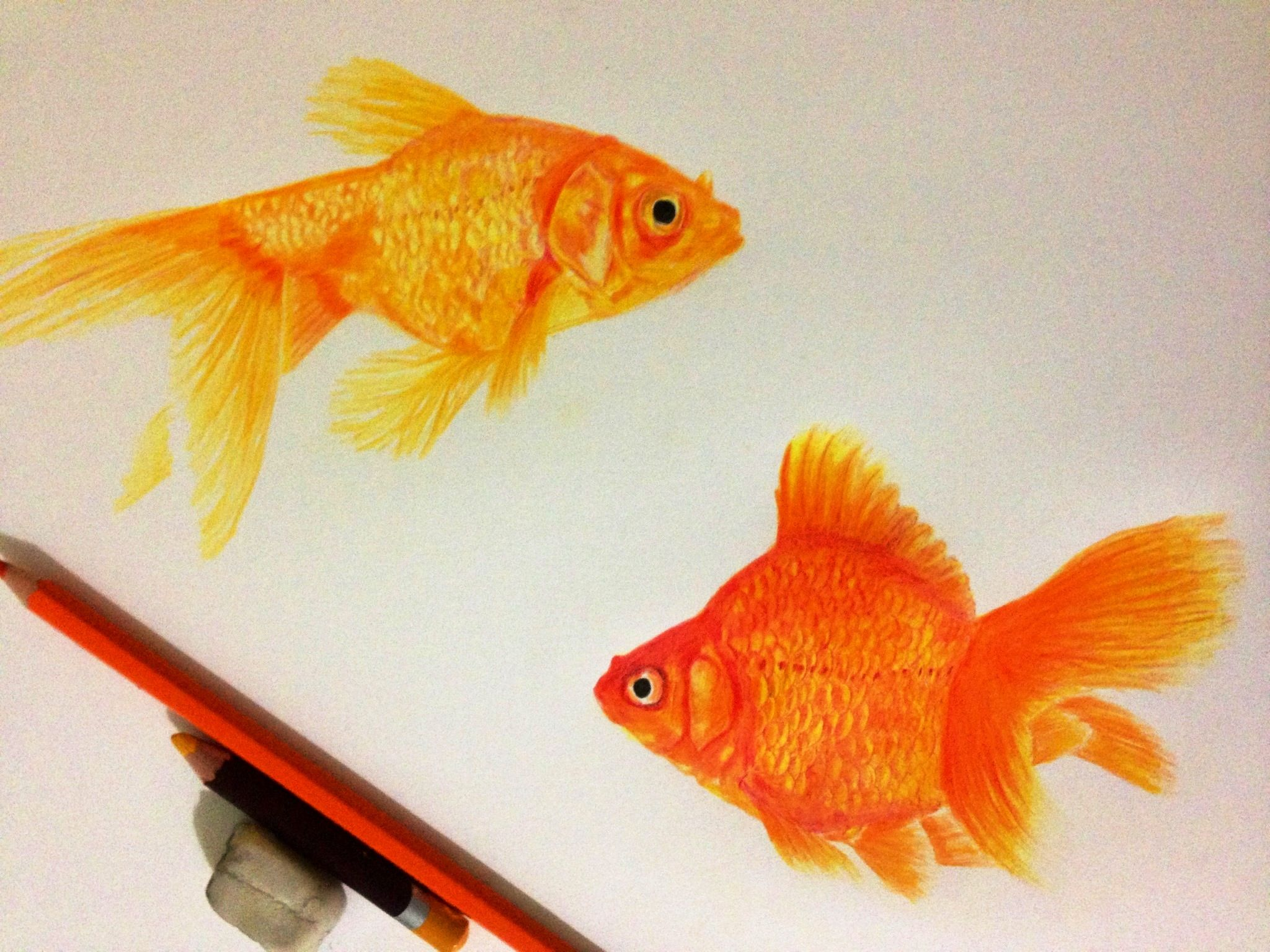 Color Pencil Drawing Gold Fishes Color Pencil Drawing Pencil Drawings Realistic Drawings