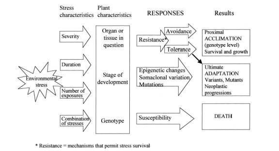 This Is A Flow Chart Of How Environmental Stresses Affect Plants